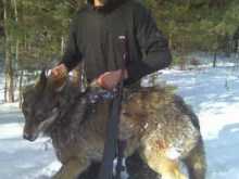 wolf hunting in estonia2