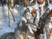 wolf hunting in estonia