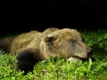 bear hunting in estonia5
