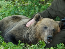 bear hunting in estonia1