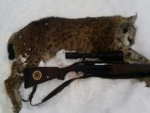 lynx hunting in estonia4